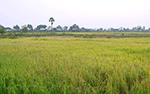 Affaire riz plastique cambodgien