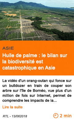 Economie huile de palme le bilan sur la biodiversite est catastrophique en asie