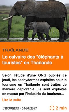 Economie le calvaire des elephants a touristes en thailande