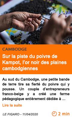 Economie sur la piste du poivre de kampot l or noir des plaines cambodgiennes