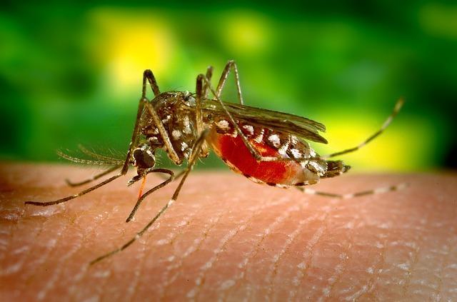 Paludisme et dengue au cambodge et dans le monde 1