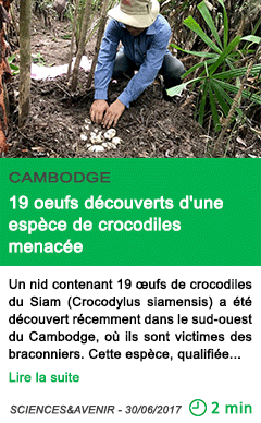 Science 19 oeufs decouverts d une espece de crocodiles menacee