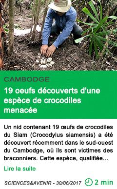 Science 19 oeufs decouverts d une espece de crocodiles menacee