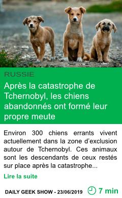 Science apres la catastrophe de tchernobyl les chiens abandonnes ont forme leur propre meute page001