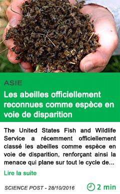 Science asie les abeilles officiellement reconnues comme espece en voie de disparition
