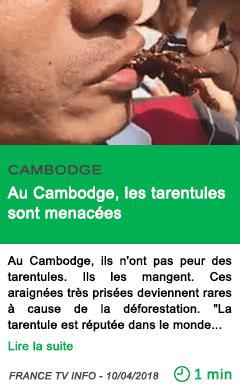 Science au cambodge les tarentules sont menacees 1