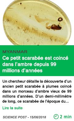 Science ce petit scarabee est coince dans l ambre depuis 99 millions d annees