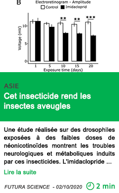 Science cet insecticide rend les insectes aveugles