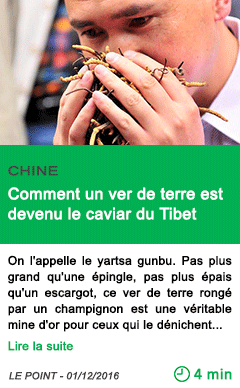 Science chine comment un ver de terre est devenu le caviar du tibet