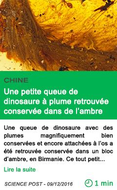 Science chine une petite queue de dinosaure a plume retrouvee conservee dans de l ambre