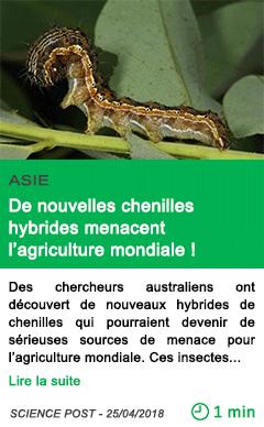Science de nouvelles chenilles hybrides menacent l agriculture mondiale