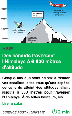 Science des canards traversent l himalaya a 6 800 metres d altitude