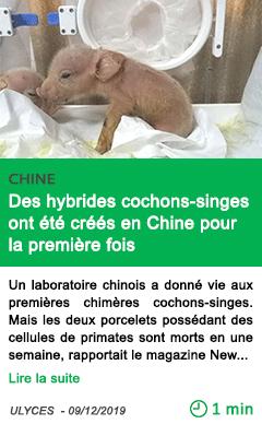 Science des hybrides cochons singes ont ete crees en chine pour la premiere fois