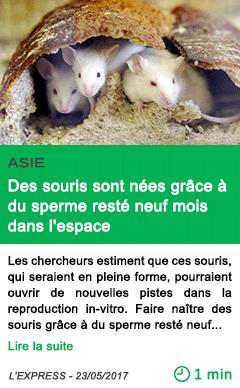 Science des souris sont nees grace a du sperme reste neuf mois dans l espace