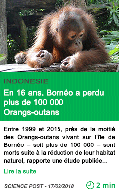 Science en 16 ans borneo a perdu plus de 100 000 orangs outans