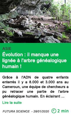 Science evolution il manque une lignee a l arbre genealogique humain
