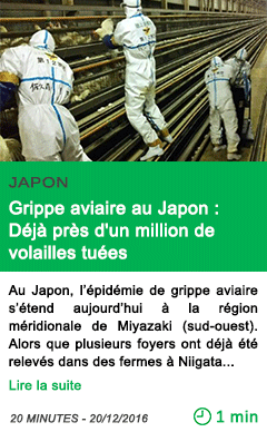 Science grippe aviaire au japon deja pres d un million de volailles tuees