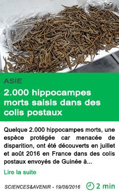 Science hippocampes