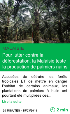 Science huile de palme pour lutter contre la deforestation la malaisie teste la production de palmiers nains page001