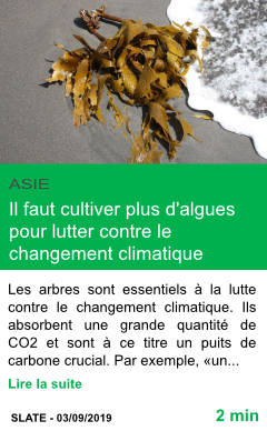 Science il faut cultiver plus d algues pour lutter contre le changement climatique page001