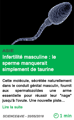 Science infertilite masculine le sperme manquerait simplement de taurine