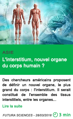Science l interstitium nouvel organe du corps humain