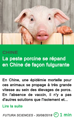 Science la peste porcine se repand en chine de facon fulgurante