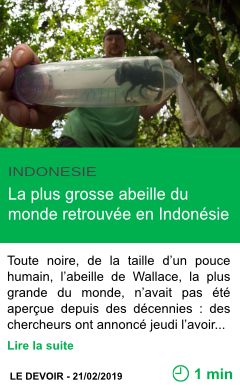 Science la plus grosse abeille du monde retrouvee en indonesie page001