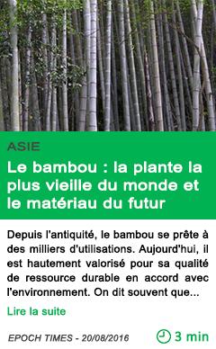 Science le bambou la plante la plus vieille du monde et le materiau du futur