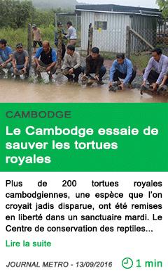 Science le cambodge essaie de sauver les tortues royales
