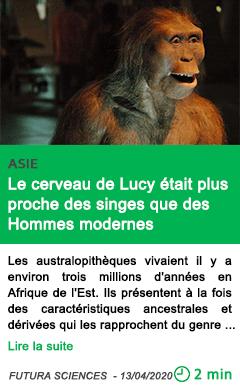 Science le cerveau de lucy etait plus proche des singes que des hommes modernes