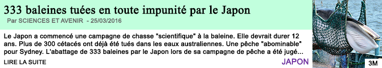 Science le japon a tue 333 baleines
