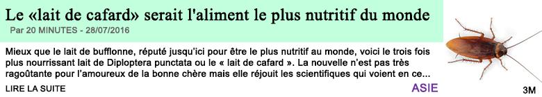 Science le lait de cafard serait l aliment le plus nutritif du monde