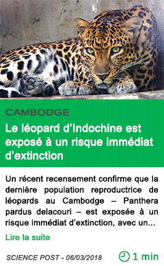 Science le leopard d indochine est expose a un risque immediat d extinction