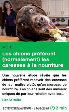 Science les chiens preferent normalement les caresses a la nourriture