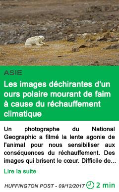 Science les images dechirantes d un ours polaire mourant de faim a cause du rechauffement climatique