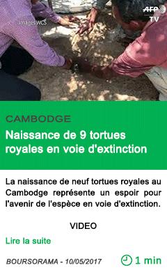 Science naissance de 9 tortues royales en voie d extinction