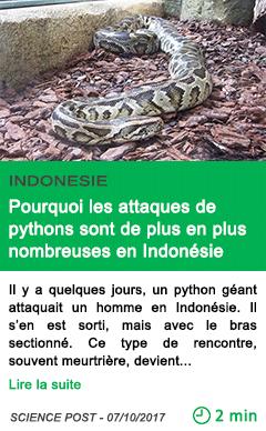 Science pourquoi les attaques de pythons sont de plus en plus nombreuses en indonesie
