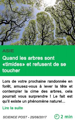 Science quand les arbres sont timides et refusent de se toucher