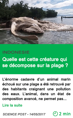 Science quelle est cette creature qui se decompose sur la plage