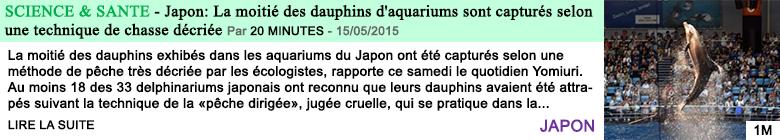 Science sante japon la moitie des dauphins d aquariums sont captures selon une technique de chasse decriee 1