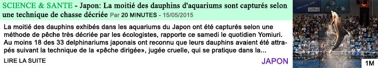 Science sante japon la moitie des dauphins d aquariums sont captures selon une technique de chasse decriee