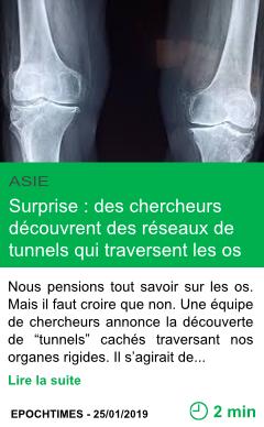 Science surprise des chercheurs decouvrent des reseaux de tunnels qui traversent les os page001