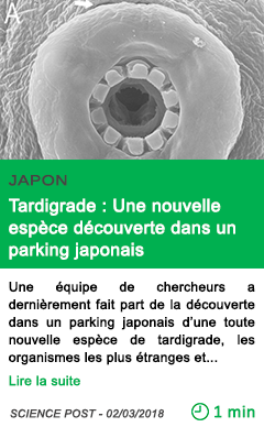 Science tardigrade une nouvelle espece decouverte dans un parking japonais