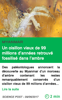 Science un oisillon vieux de 99 millions d annees retrouve fossilise dans l ambre