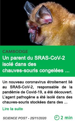 Science un parent du sras cov 2 isole dans des chauves souris congele es au cambodge