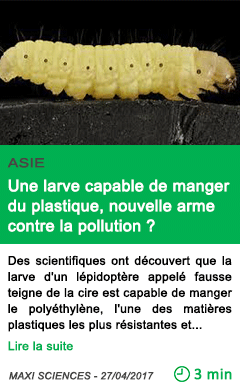 Science une larve capable de manger du plastique nouvelle arme contre la pollution
