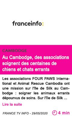 Societe au cambodge des associations soignent des centaines de chiens et chats errants