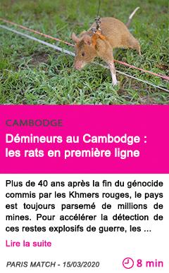 Societe demineurs au cambodge les rats en premiere ligne