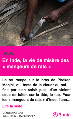 Societe en inde la vie de misere des mangeurs de rats